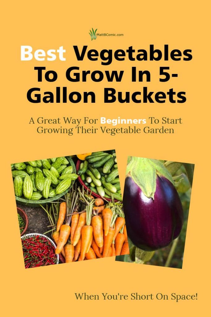 5 Gallon Container Vegetable Gardening Post Graphic