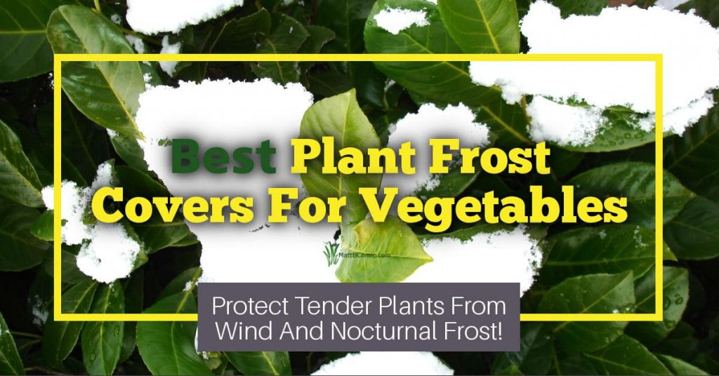 Best Frost Protection For Vegetable Gardens Featured Image