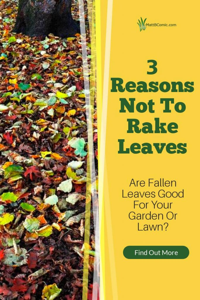 3 Reasons Not To Rake Leaves Post Graphic